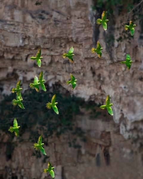 Explora la sorprendente Sima de las Cotorras   Rincones de México